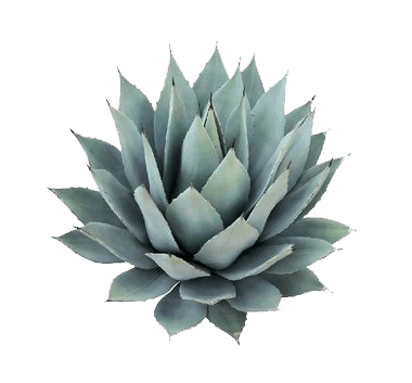 IC_Agave