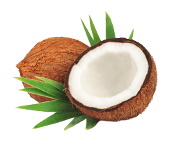 IC_Coconut
